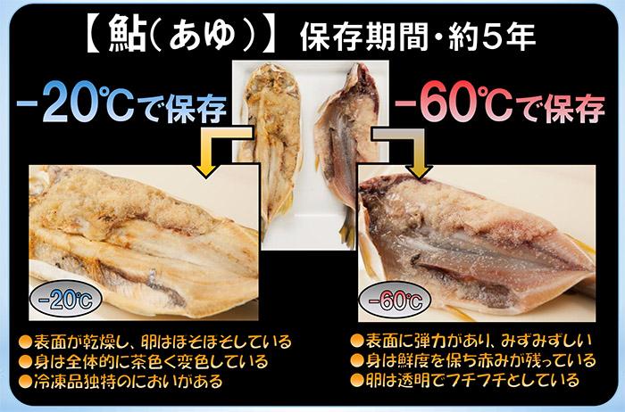 超低温冷凍庫の比較